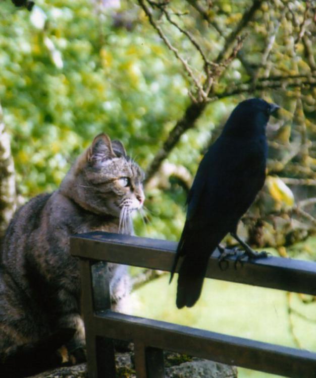 cat&cra.jpg