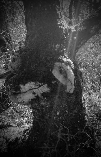 arbre-gueule-1.jpg