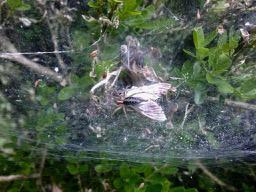 araignéepyr-3.jpg