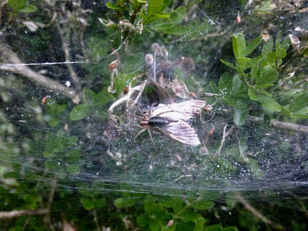 araignée-pyr-5.jpg
