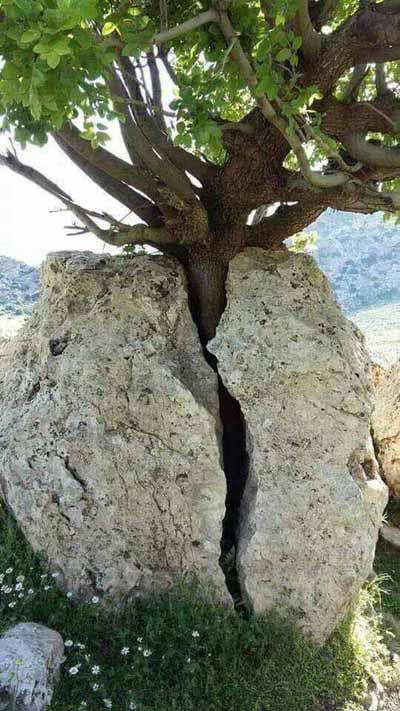 arbre roc.jpg